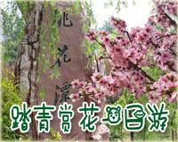 苏州太湖西山梅花节!