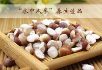 太湖水八仙-鸡头米